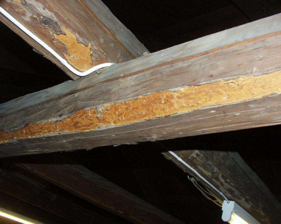 Bilde av lokale skader i bærende takkonstruksjon forårsaket av blåbukk.