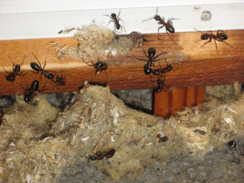 Stokkmaur avdekket i vegg