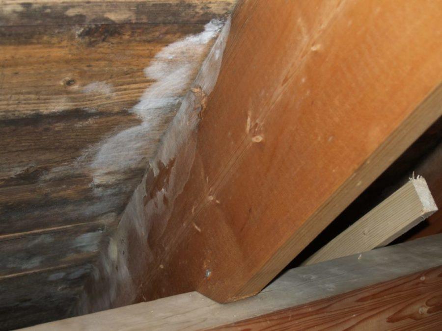Bilde av en kondensskade på loft hvor det har utviklet seg barksopp og svertesopp