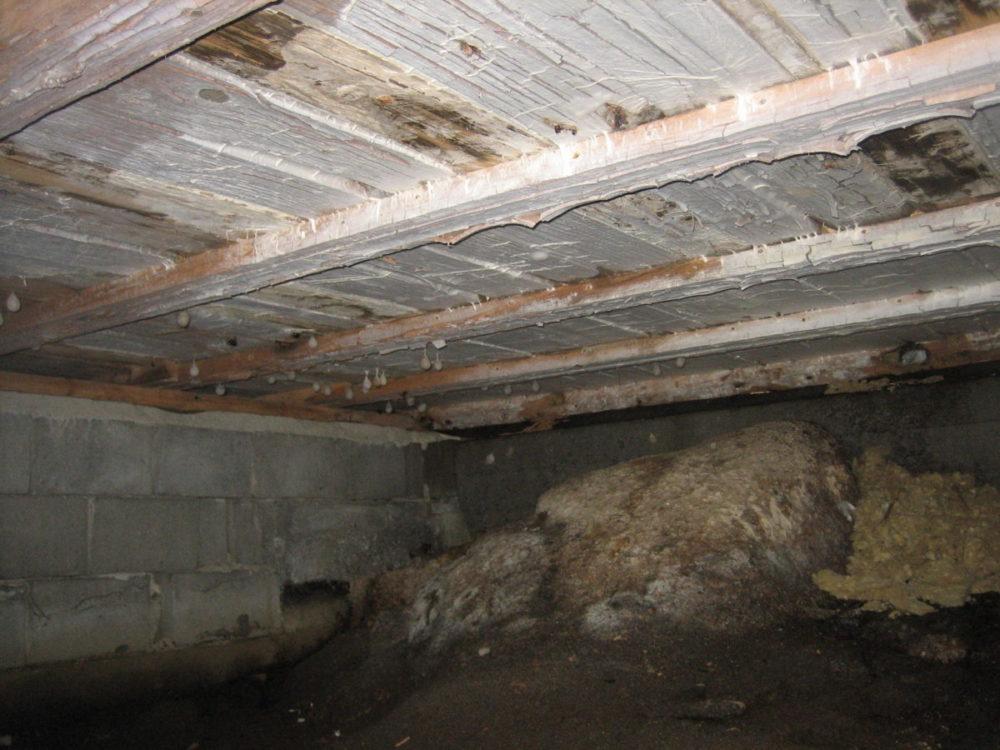 Mycel fra hvit tømmersopp i krypkjeller. Høy fuktighet og godt livsgrunnlag for edderkopper og andre insekter.