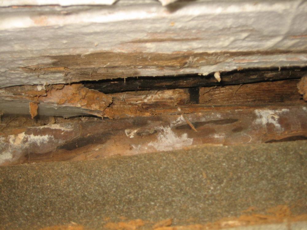 Råteskade forårsaket av hvit tømmersopp. Treverket er revnet på tvers av fiberretningen og bæreevnen er ødelagt.