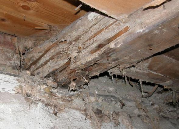 Angrep i bjelke sett fra undersiden av gulvet.