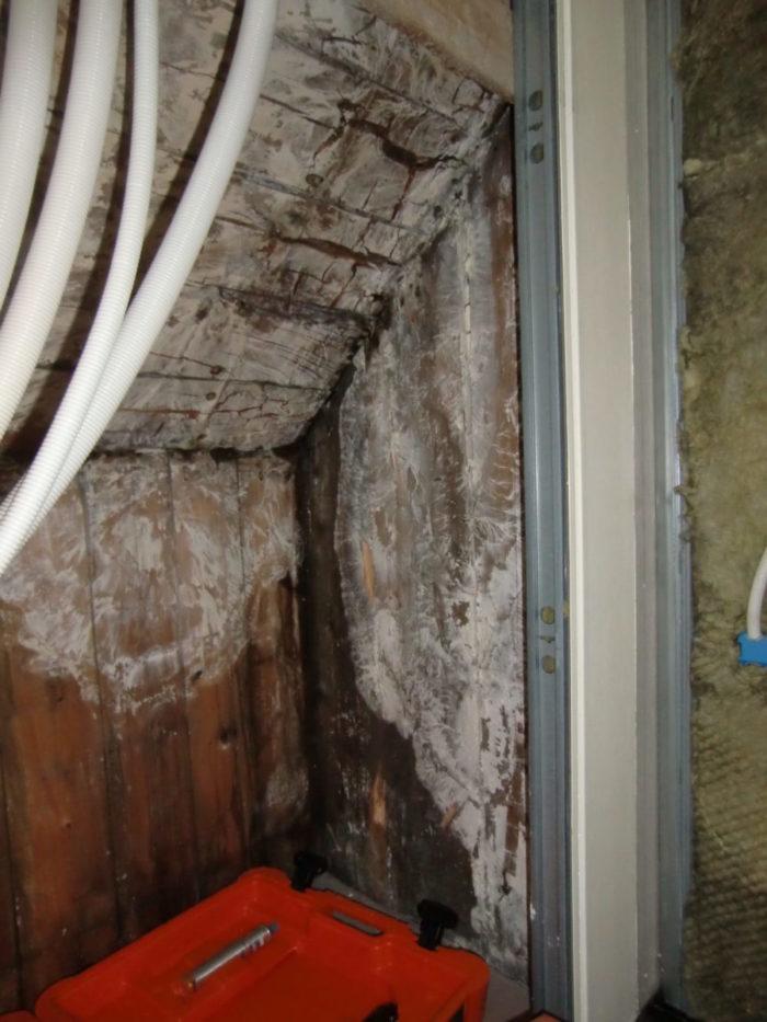 Hvit tømmersopp på loft.