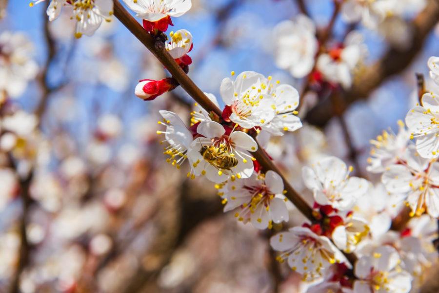Gjør en livsviktig jobb. De lever av pollen og nektar.