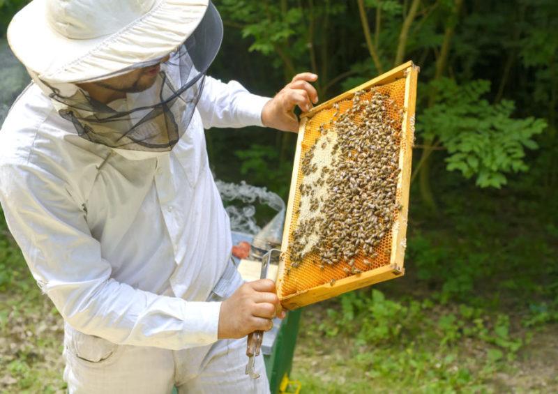Kan hjelpe med å flytte biene på riktig måte.