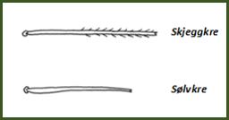 Illustrasjonen viser at skjeggkreet har mer hår enn sølvkreet