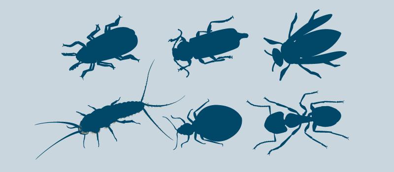 Informasjon og råd og insekter