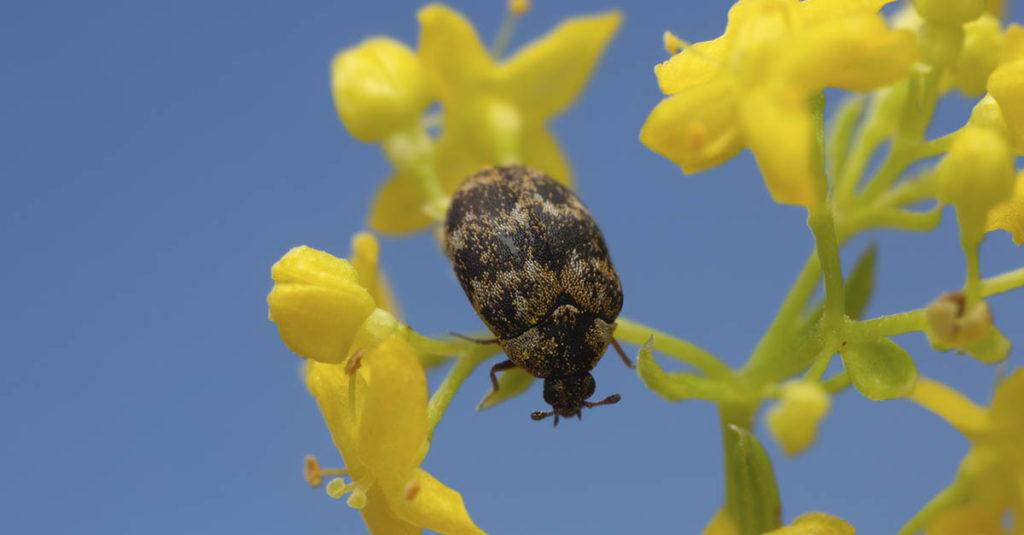 Museumsbille på gul blomst