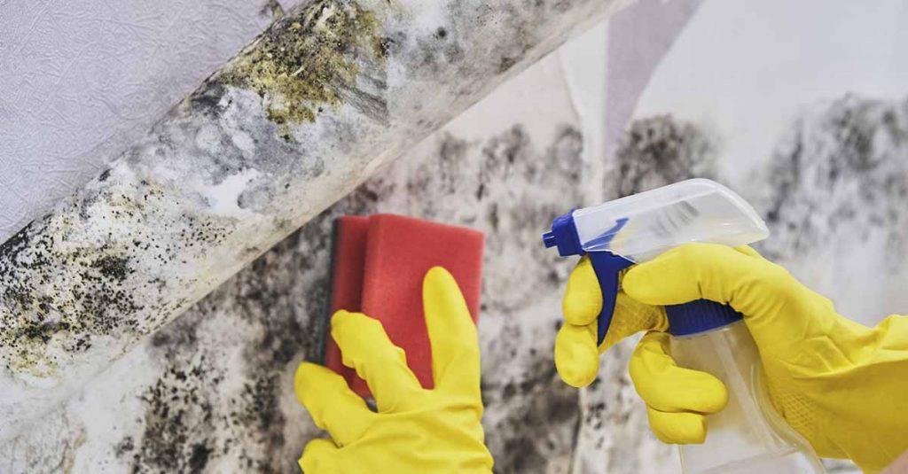 Vasker bort muggsopp